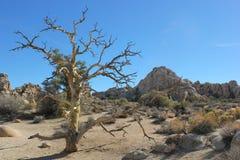 Η έρημος της Καλιφόρνιας Στοκ εικόνες με δικαίωμα ελεύθερης χρήσης