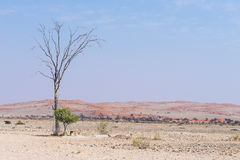 Η έρημος Namib, roadtrip στο θαυμάσιους εθνικούς πάρκο Namib Naukluft, τον προορισμό ταξιδιού και το κυριώτερο σημείο στη Ναμίμπι Στοκ εικόνα με δικαίωμα ελεύθερης χρήσης