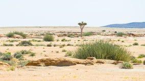 Η έρημος Namib, roadtrip στο θαυμάσιους εθνικούς πάρκο Namib Naukluft, τον προορισμό ταξιδιού και το κυριώτερο σημείο στη Ναμίμπι Στοκ εικόνες με δικαίωμα ελεύθερης χρήσης