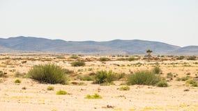 Η έρημος Namib, roadtrip στο θαυμάσιους εθνικούς πάρκο Namib Naukluft, τον προορισμό ταξιδιού και το κυριώτερο σημείο στη Ναμίμπι Στοκ Φωτογραφίες