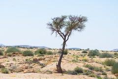 Η έρημος Namib, roadtrip στο θαυμάσιους εθνικούς πάρκο Namib Naukluft, τον προορισμό ταξιδιού και το κυριώτερο σημείο στη Ναμίμπι Στοκ Εικόνες