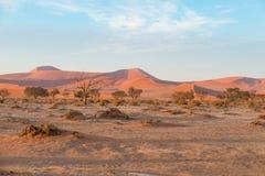 Η έρημος Namib, roadtrip στο θαυμάσιο εθνικό πάρκο Namib Naukluft, προορισμός ταξιδιού στη Ναμίμπια, Αφρική Πλεγμένη ακακία TR Στοκ εικόνες με δικαίωμα ελεύθερης χρήσης