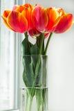 η δέσμη απομόνωσε κόκκινο vase τουλιπών Στοκ Εικόνες
