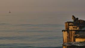 Η ήρεμη θάλασσα της Βαλτικής απόθεμα βίντεο