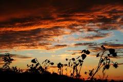 Ηλίανθοι ενάντια στον ουρανό βραδιού Στοκ Φωτογραφία