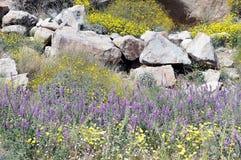 Ηλίανθοι ερήμων, λούπινα, καθαρές άκρες στοκ εικόνα με δικαίωμα ελεύθερης χρήσης
