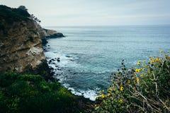 Ηλίανθοι και άποψη των απότομων βράχων κατά μήκος του Ειρηνικού Ωκεανού, στο Λα Jol Στοκ Εικόνες
