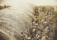 Ηλίανθοι και παλαιό δέμα σανού στο χορταριασμένο τομέα αγροτική Αμερική Στοκ Φωτογραφία