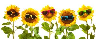 Ηλίανθοι με τα γυαλιά ηλίου στοκ εικόνες
