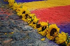 Ηλίανθοι ταπήτων Santa Semana στοκ εικόνες