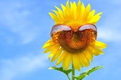 Ηλίανθος με τα γυαλιά ηλίου Στοκ Εικόνες