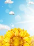 Ηλίανθος με το μπλε ουρανό - φθινόπωρο 10 eps Στοκ φωτογραφία με δικαίωμα ελεύθερης χρήσης