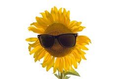 Ηλίανθος στα γυαλιά ήλιων Στοκ φωτογραφία με δικαίωμα ελεύθερης χρήσης