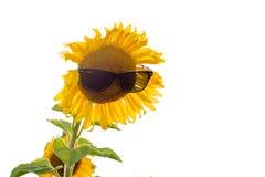 Ηλίανθος στα γυαλιά ήλιων Στοκ φωτογραφίες με δικαίωμα ελεύθερης χρήσης