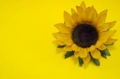 Ηλίανθος στην κίτρινη ανασκόπηση Στοκ Εικόνες