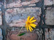Ηλίανθος στη διάβαση πεζών τούβλου Στοκ εικόνα με δικαίωμα ελεύθερης χρήσης