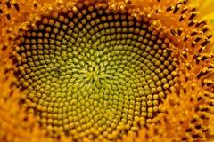 Ηλίανθος Swirly Στοκ εικόνες με δικαίωμα ελεύθερης χρήσης