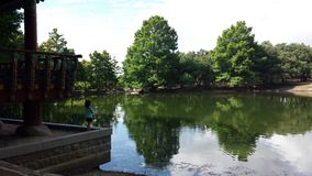 Η λίμνη παπιών Στοκ Φωτογραφίες