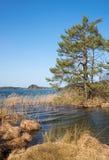 Η λίμνη περιοχής κονσερβών φύσης, Βαυαρία Στοκ Εικόνα