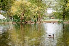 Η λίμνη στο πάρκο Patterson, στη Βαλτιμόρη, Μέρυλαντ στοκ εικόνες