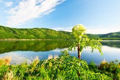 Η λίμνη φυσική Στοκ φωτογραφίες με δικαίωμα ελεύθερης χρήσης