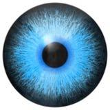 Η ίριδα ματιών παρήγαγε τη σύσταση μισθώσεων ελεύθερη απεικόνιση δικαιώματος