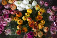 Η αίσθηση κοιτάζει και μυρίζει την ανθοδέσμη τριαντάφυλλων λ χρώματος Στοκ φωτογραφίες με δικαίωμα ελεύθερης χρήσης