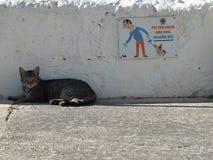 Η αίσθηση χιούμορ μιας γάτας Στοκ φωτογραφίες με δικαίωμα ελεύθερης χρήσης