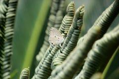 Η αγάπη είναι ένα ειρηνικό συναίσθημα, όπως ένα λουλούδι αγκαλιάζοντας μια πεταλούδα στοκ εικόνες με δικαίωμα ελεύθερης χρήσης