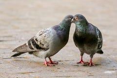 Η αγάπη είναι στον αέρα Στοκ φωτογραφίες με δικαίωμα ελεύθερης χρήσης
