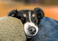 Η αγάπη ενός καλού σκυλιού Στοκ Εικόνες