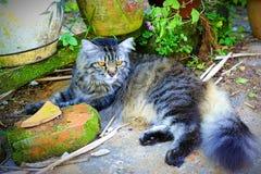 Η αγαπημένη γάτα που στηρίζεται από το μίνι κήπο στοκ φωτογραφίες με δικαίωμα ελεύθερης χρήσης