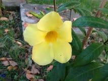 Η ΑΓΑΠΗ είναι το λουλούδι Μια ζωή χωρίς όνειρα είναι όπως έναν κήπο χωρίς λουλούδια Στοκ Εικόνες