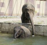 Η αγελάδα ελεφάντων λούζει το μόσχο ελεφάντων Στοκ φωτογραφία με δικαίωμα ελεύθερης χρήσης