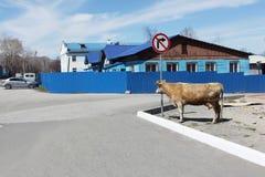 Η αγελάδα που στέκεται σε ένα σημάδι - η στροφή είναι στο δικαίωμα που απαγορεύουν στοκ φωτογραφίες με δικαίωμα ελεύθερης χρήσης