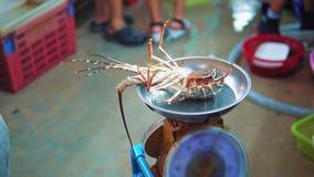 Η αγορά τροφίμων νύχτας στην Ασία, αστακός στις κλίμακες ανακατώνει τα νύχια, που πωλούν τα θαλασσινά στα εστιατόρια και τους ταξ απόθεμα βίντεο