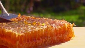 Η αεροσυνοδός ανυψώνει ένα κομμάτι περικοπών του μελιού στις κηρήθρες απόθεμα βίντεο