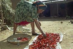 Η αιθιοπική γυναίκα ξεραίνει τα πιπέρια στο σπίτι Στοκ Εικόνες