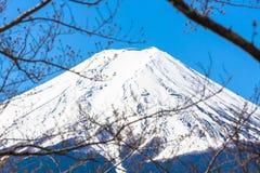 Η αιχμή του όρους λοφιοφόροι λόφος και δέντρα το fuji κοιτάζει μέσω των κλάδων sakura Στοκ Εικόνα