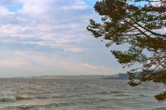 Η ακτή, δέντρα πεύκων στην προκυμαία, το αμμώδες χώμα και την ξηρά χλόη στην ακτή στοκ εικόνα