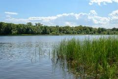Η ακτή ποταμών στην ηλιόλουστη θερινή ημέρα Στοκ φωτογραφίες με δικαίωμα ελεύθερης χρήσης