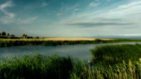 Η ακτή της λιμνοθάλασσας Vistula που καλύπτεται με τις βιασύνες απόθεμα βίντεο