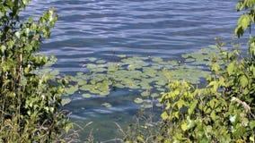 Η ακτή του ευρύ ποταμού, η όμορφη φύση Στοκ Εικόνες