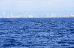 Η ακτή του Gold Coast Στοκ Εικόνες