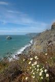 Η ακτή Redwood βόρεια του υψηλού Bluff αγνοεί με τα λουλούδια Στοκ φωτογραφίες με δικαίωμα ελεύθερης χρήσης