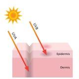 Η ακτινοβολία UVA και UVB διαπερνά στο δέρμα Στοκ Εικόνες