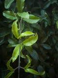 Η αλλαγή χρώματος στα φύλλα στοκ φωτογραφία
