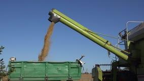 Η αλωνιστική μηχανή ξεφορτώνει το σιτάρι σίτου στο ρυμουλκό φορτηγών στον τομέα καλλιεργήσιμου εδάφους 4K φιλμ μικρού μήκους