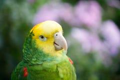 η Αμαζώνα κάλυψε κίτρινο Στοκ Φωτογραφίες