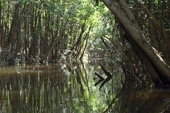η Αμαζώνα πλημμύρισε το τρ&omicron Στοκ εικόνα με δικαίωμα ελεύθερης χρήσης